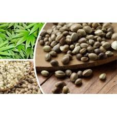 Купить семена суданской травы в Украине