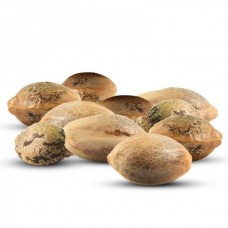 Чем опасно покупать семена конопли на ОЛХ