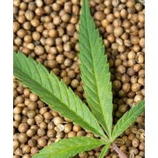 Семена афганки