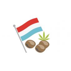 Купить семена конопли из Голландии