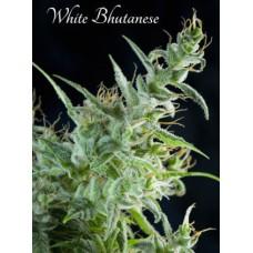 White Bhutanese