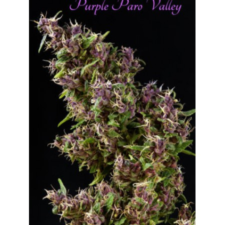 Purple Paro Valley фото
