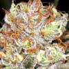 семена марихуаны Auto AK-47 XL
