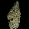 семена марихуаны Auto White Widow
