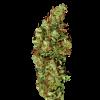 Семена конопли Jamaica Sativa