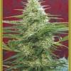 семена марихуаны Satori